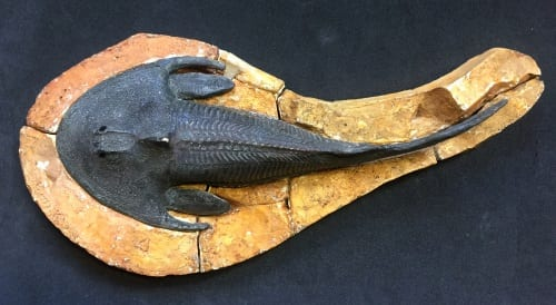 LDUCZ-V730 Cephalaspis salweyi model and mould