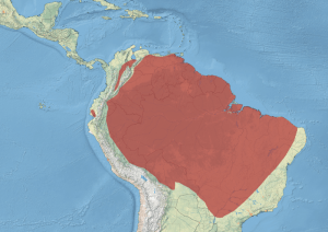 Distribution of Anhima cornuta across South America