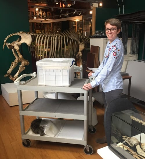 Hannah Cornish wheeling away Fossil Box 12 upon completion of documentation of 408 fossils.
