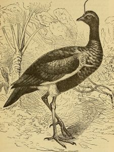 An illustration of
