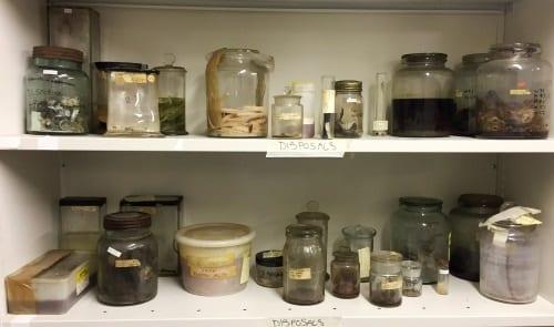 Gone but not forgotten. Fluid specimens disposed September 2017.