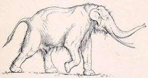 Straight tusked elephant (Palaeoloxodon antiquus) by Erwin S. Christman, 1916