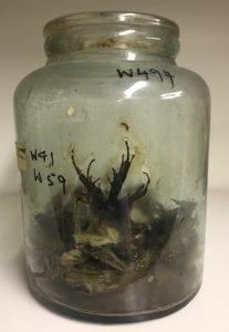 W494 (W41 W59) Frogs?