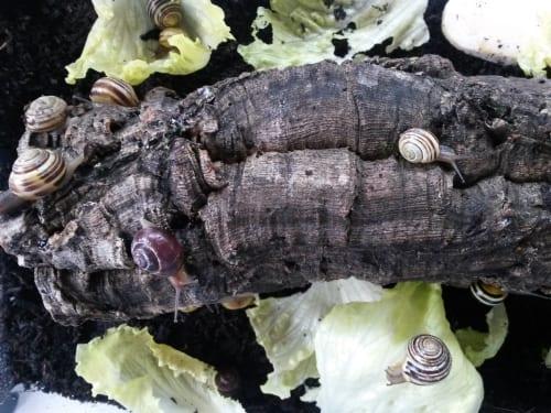 snails_3