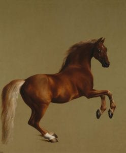 By George Stubbs - http://www.nationalgallery.org.uk/paintings/george-stubbs-whistlejacket, Public Domain, Link