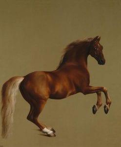 By George Stubbs - http://www.nationalgallery.org.uk/paintings/george-stubbs-whistlejacket, Public Domain, Link