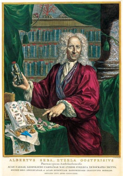 Portrait of Albertus Seba. 1731. Jacobus Houbraken after Jan Maurits Quinkhard