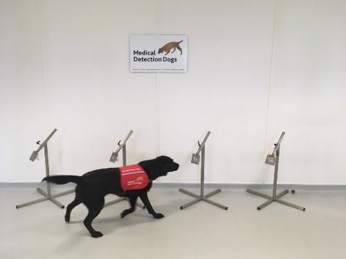 One of the bio-detection dogs searches the the samples.