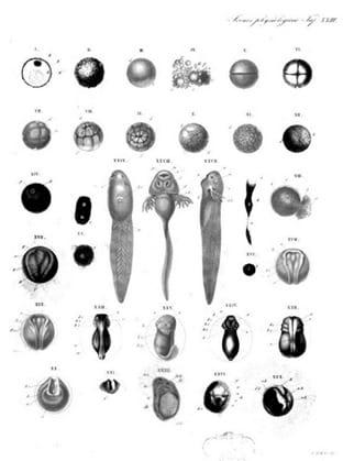 Plate XXIII from Ecker's Icones Physiologicae: Erlaeuterungstafeln zur Physiologie und Entwickelungsgeschichte (1859)