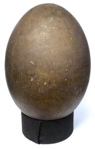 LDUCZ-Y1 elephant bird egg cast