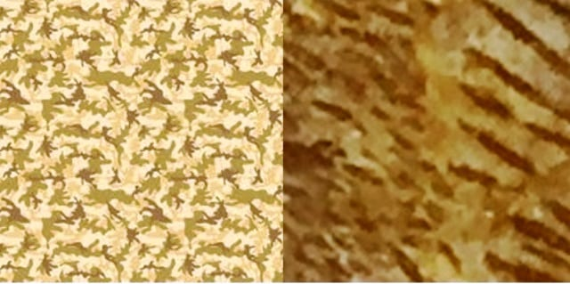 Comparison of Desert camouflage pattern and a close up of Macropoma mantelli
