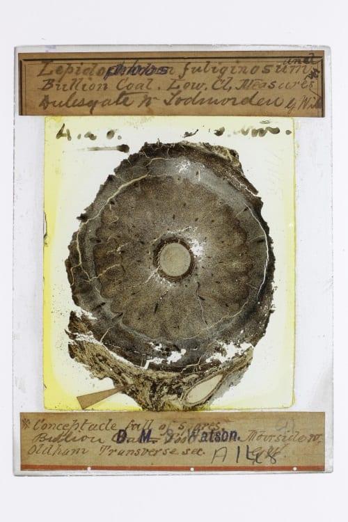 D.M.S. Watson Coal ball slide