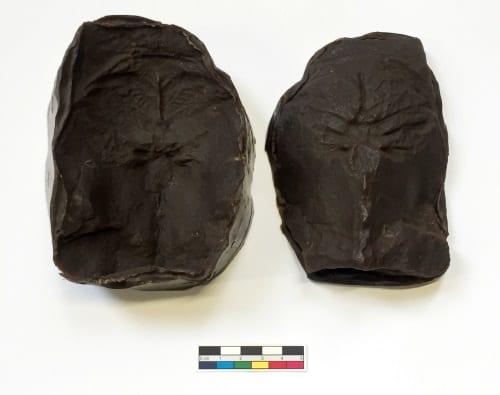 LDUCZ-V1129 Cephalaspis Brown Welvic cast/mould