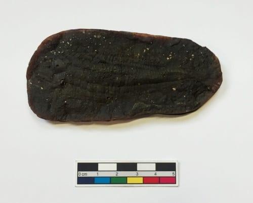 LDUCZ-V1697 Australosomus merlei Brown latex mould