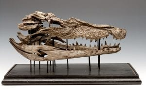 LDUCZ-X121 exploded skull of Crocodylus porosus (saltwater crocodile)