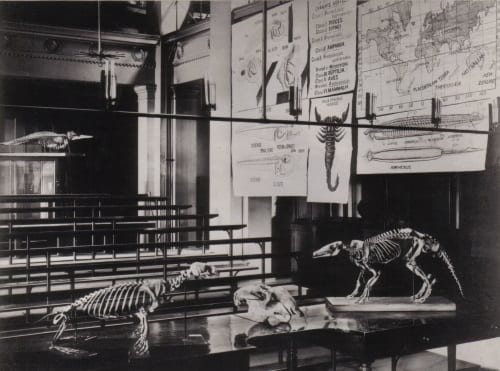 Lankester Long Course in Zoology 1887 in Gustave Tuck Lecture Theatre