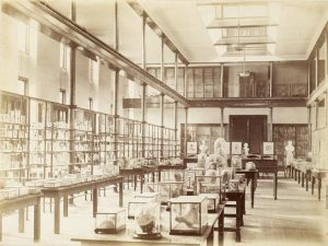 Sepia image of the UCL Anatomy Museum in the 19th century