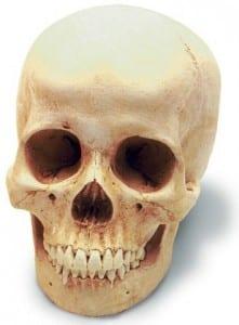 Skull_expertreport