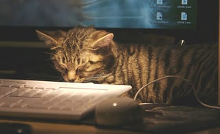 Muffins got tired waiting for fellow students to reply to his post.