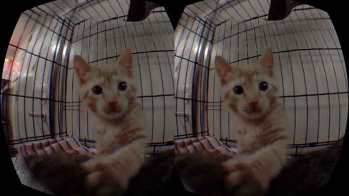 Yeah, kittens.