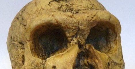 La Chapelle-Aux-Saints Neanderthal cast held at the Grant Museum - notice the pronounced brow ridge over the eye sockets.