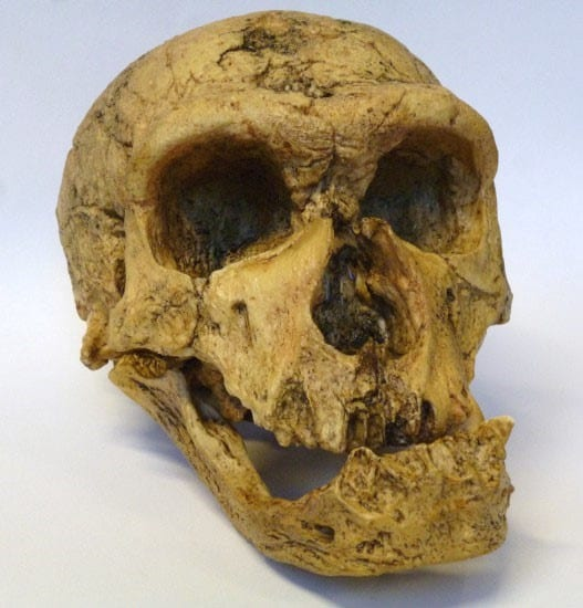 Skull of Neanderthal Man