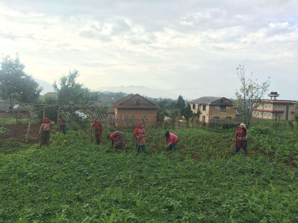 women working farming rice in Nepal