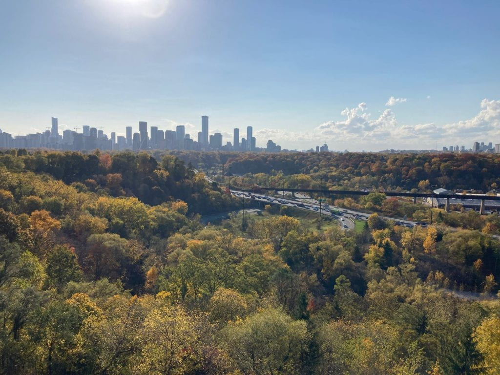 A landscape of fir trees with the cityscape of Toronto on the horizon