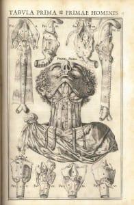 Casserius tabula prima primae hominis