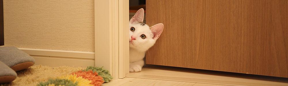 White cat beside brown wooden door