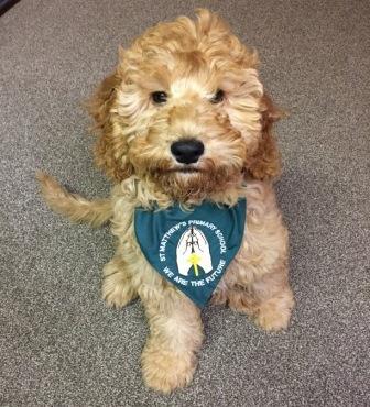 Our School Dog