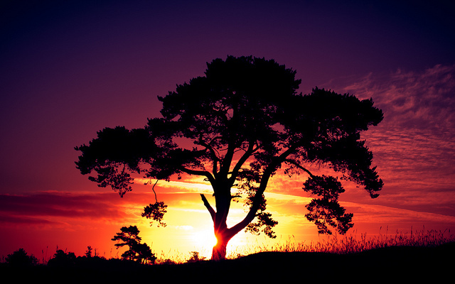 Landscape Photography Sun Sunset Tree Favim 310265