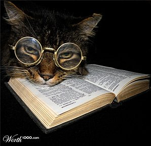 Book cat - educating himself to understand what it means to live peacefully in a diverse world