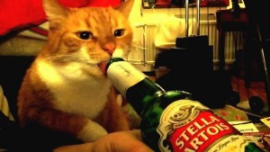 Boozy cat - it's enough to drive a cat to drink!