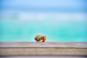Image of a Hermit Crab on the shore