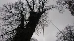 An image of the tree abseil at the centre