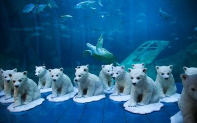 Polar Bear cubs bring important message to Plymouth
