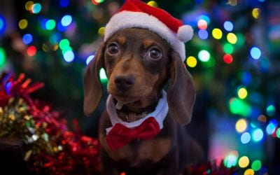 Dogs Trust: Fur-ever Homes At Christmas.