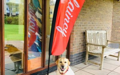 Pet Of The Month – Therapy Dog, Pippin.