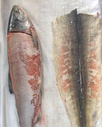 3 HEZHE FISH SKIN CRAFT WORKSHOP. Tongjiang. skinned salmons.Photographer Elisa PalominoJPG