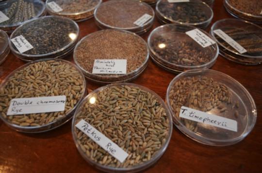 old seed varieties