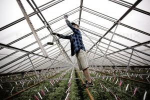 El-intensive gartnerier modtager 10 millioner i tilskud i år og yderligere 100 millioner i 2017