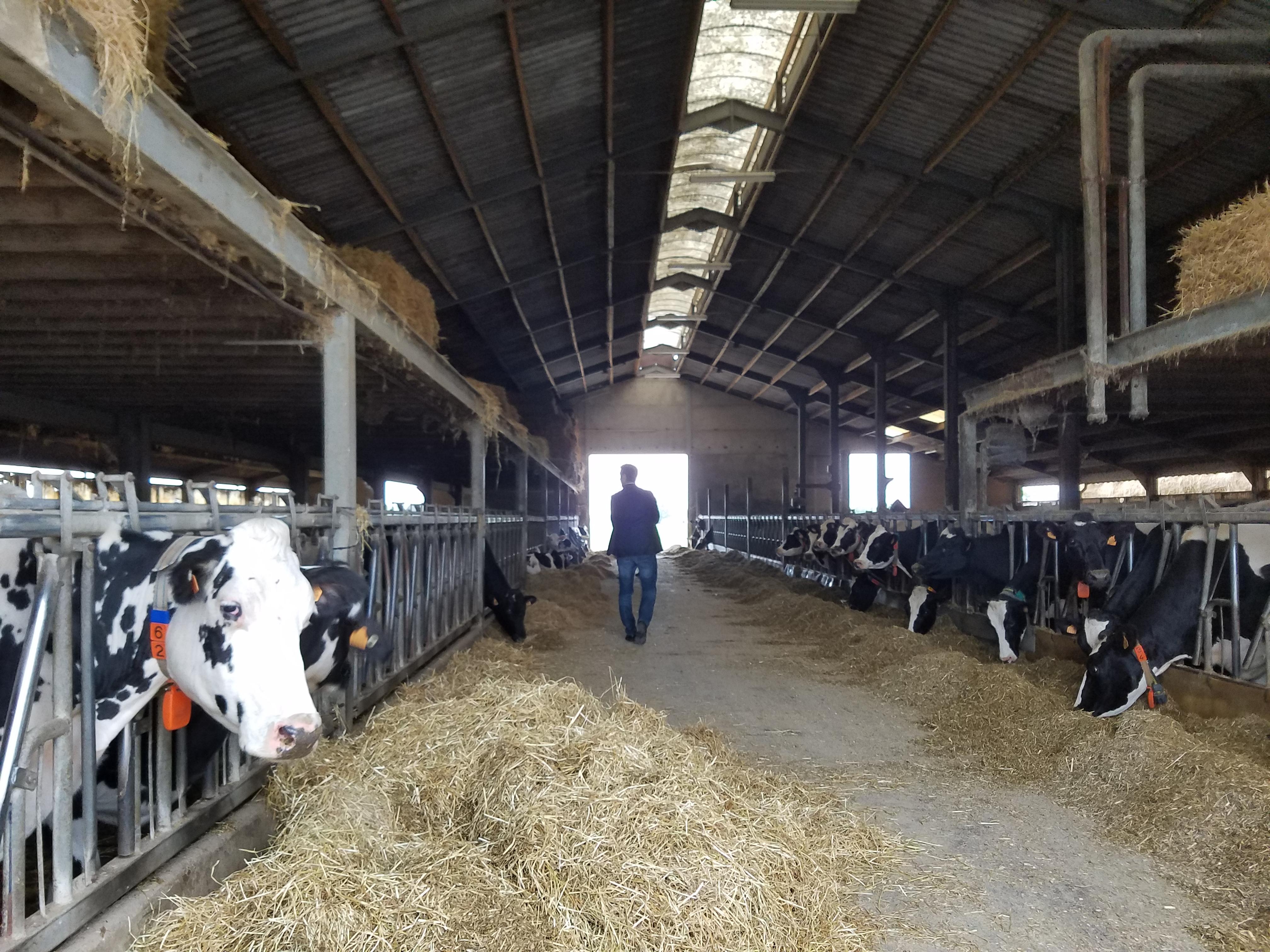 Dairy farm in Braine-le-comte, Belgium